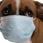 Coronavirus and pets – should you worry