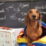 Back to School Safety Tips for Pets